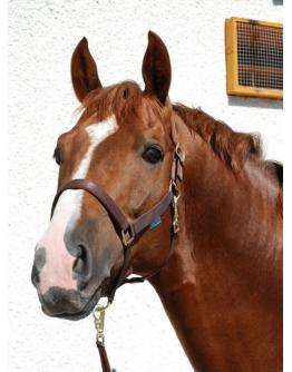 Bucas Grimma Dublin (Ponny, Brun)